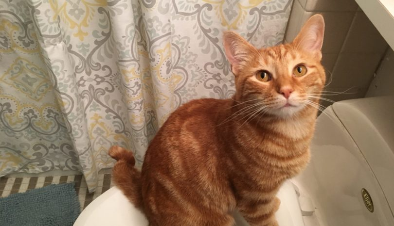 I Am Not A Cat Lady: Bathroom Buddies.
