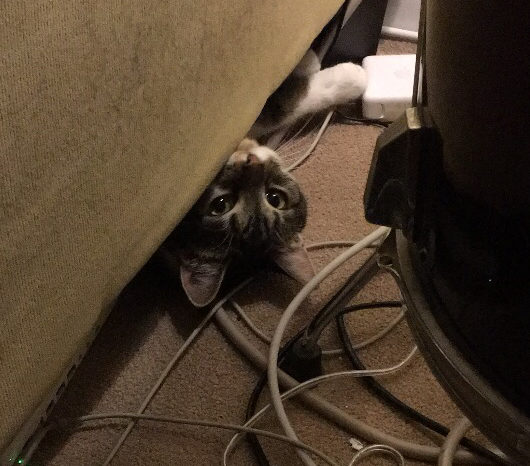 I Am Not A Cat Lady: How Did You Get There?!