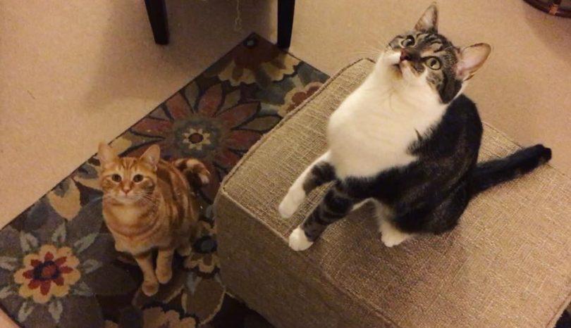 I Am Not A Cat Lady: Prologue.